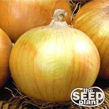 Texas Grano 502 Onion Seeds - 200 SEEDS-SAME DAY SHIPPING
