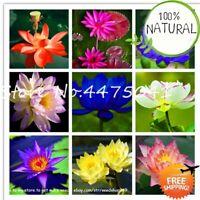 High Quality 100% Seeds Plants Original Bowl Lotus Bonsai Flower Mixed 10pcs