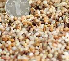 Natural river sand stones rocks fairy garden miniatures gnomes moss terrarium OP