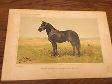 ANTIQUE FRENCH CHROMLITHO PRINT OLIVIER DePENNE PERCHERON HORSE 10.75 x 7.25