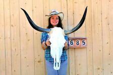 "STEER SKULL LONG HORNS MOUNTED 2' 11"" COW BULL TAXIDERMY LONGHORN H5685"