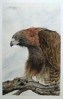 Art Card Note Card Wildlife Picture Bird Hawk Nature Watercolor Painting