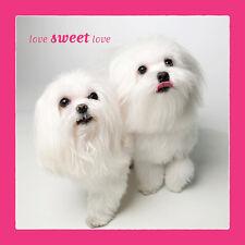 Dog Studio Love Greeting Card - LOVE SWEET LOVE (Maltese) - DS-C-LV-1839-144