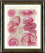 Old Antique Dictionary page Art Print -  Pink  Jellyfish Upcycled page Print