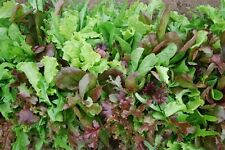 Certified Organic Mesclun mix Seed(1000ct)Mixed Greens Open Pollinated 2017 seed