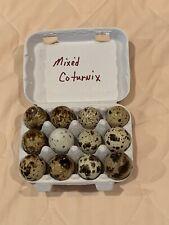 Mixed Coturnix quail hatching eggs 48+