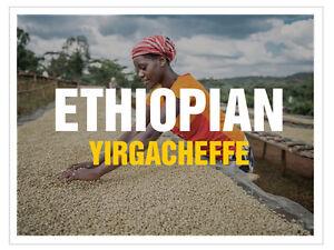 up to 100 lbs Ethiopian Yirgacheffe Washed Grade 1 Fresh Green/Raw Coffee Beans