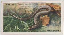 Slowworm Lizard Anguis fragilus1930s Ad Trade Card