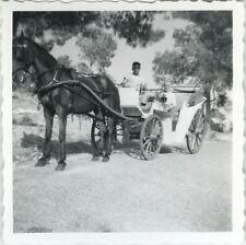 PHOTO ANCIENNE - VINTAGE SNAPSHOT - ATTELAGE CHEVAL CALÈCHE PALMA - HORSE 1961