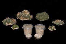 Peyote (Lophophora williamsii,Ariocarpus etc) specialized cultivation soil 500ml