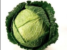 """Cabbage Seeds """"English Savoy"""" (200 Seeds) Excellent Flavour"""