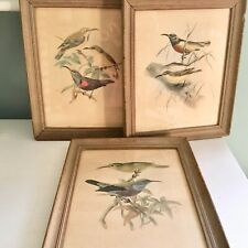 KEULEMANS HAND COLORED Bird Lithographs Sunbirds Framed Set Of 3