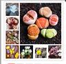100seeds Mix Lithops bonsai Living Stones Flower Succulent Cactus Organic Plant