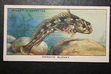 Smooth Blenny    Original 1930's Vintage Illustrated Card  VGC