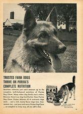 1970 Print Ad of Purina Dog Chow German Shepherd on the farm