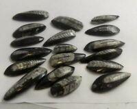 Orthoceras fossils, 1in.-2in., Morocco, 1 piece, read description