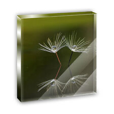Dewy Dandelion Acrylic Office Mini Desk Plaque Ornament Paperweight