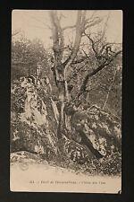 Carte postale ancienne CPA Forêt de Fontainebleau - Chêne des Fées