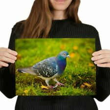 A4  - Pigeon Bird Garden Wildlife Nature Poster 29.7X21cm280gsm #46033