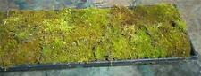 LIVE GREEN WOODLAND MOSS ASSORTED KINDS BONSAI KOI PONDS TERRARIUMS 7 X 20 FLAT