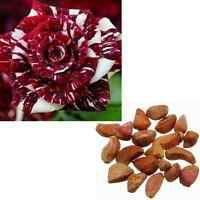 20pcs Fresh Beautiful Red Dragon Rose Bush Flower Seeds Plant Home Gardens Decor
