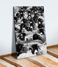 SHEEP FLOCK HEAD BLACK AND WHITE CANVAS WALL ART PRINT ARTWORK