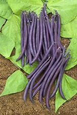 Kings Seeds - Vegetable - Dwarf French Bean Amethyst - 100 Seeds