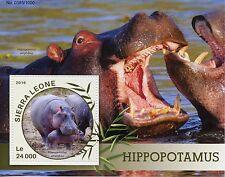 Sierra Leone 2016 MNH Hippopotamus 1v S/S Wild Animals Hippos Stamps