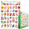 The Language of Flowers 1000 PIECE JIGSAW PUZZLE EG60000579 - Eurographics