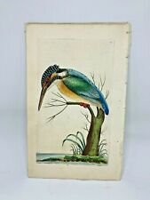 Common Kingfisher - 1783 RARE SHAW & NODDER Hand Colored Copper Engraving
