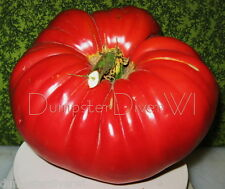Organic ITALIAN BEEFSTEAK Heirloom extra Large Carnoso TOMATO 30+seeds NON-GMO