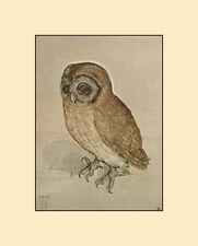 Little Owl Art Poster Print by Albrecht Dürer, 8x11