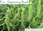 Pea Sugarsnap Bush Seed 25 Seeds Heirloom Vegetable Garden Sugar Snap Sweet