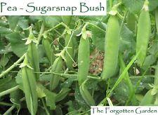 Pea Sugarsnap Bush Seed 25 Seeds Heirloom Vegetable Garden Sugar Snap Sweet