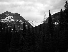 "Black & White ""Over the trees snow peak mountains"" 5 X 7 picture."