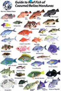 Guide to Reef Fish Cozumel, Belize, Honduras ID Card Travel 6x9 NEW B206