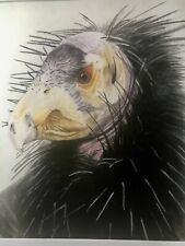 "Pastel Drawing of Grand Canyon Condor, Original, Unique Wood Frame, 17 1/2"" x 19"