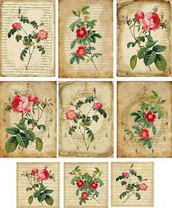 Vintage inspired roses with mini cards blank small set 6 mini cards envelopes