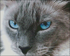 """Goldmilky Cross stitch kit """"Blue Eyes Cat Patrick  """"  14 x 11 inch (a30)"""