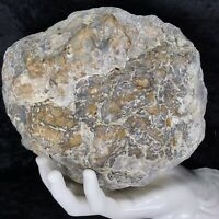 "7-1/2"" Large Geode Crystal Chalcedony Quartz Unopened Kentucky Lapidary 5.12Lb"