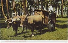 Oxcart, Men Working: Hauling Coconuts to Warehouse. Costa Rica. Pre- 1915.