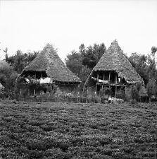 BANDAR-E PAHLEVI c. 1960 - Cabanes Maisons de Paysans - Négatif 6 x 6 - IRAN 48