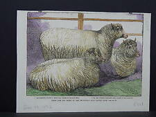 Illustrated London News Engraving 19th Century Hand Color S2#04 Prize Sheep