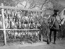 ANTIQUE REPRO 8X10 EARLY LIVE DECOY circa.1900 DUCK HUNTING PHOTO PARKER SHOTGUN