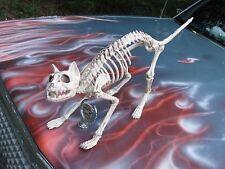 Skeleton Cat Halloween Prop Bonez Haunted House Skull Creepy Zombie Kitty Realis