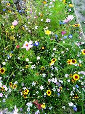 Blühende Insekten Bienen  Wiese    Wildblumen    bunte Mischung -- Portion--