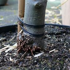 Profiqualität - Elasto-Schnur 4 mm zum Binden von Bäumen und Sträuchern (5 m)