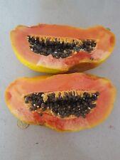 PAPAYA carica papaya FRUTO GIGANTE 1a 2 kg ( variedad de Paraguay )  20 semillas