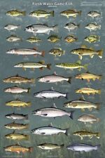 FRESH WATER GAME FISH POSTER (61x91cm) FISHING DIAGRAM WALL CHART EDUCATIONAL