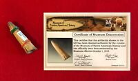 "Artifact 2 1/2"" Conical Antler Tyne Projectile Point Ex Shewey w/COMD"
